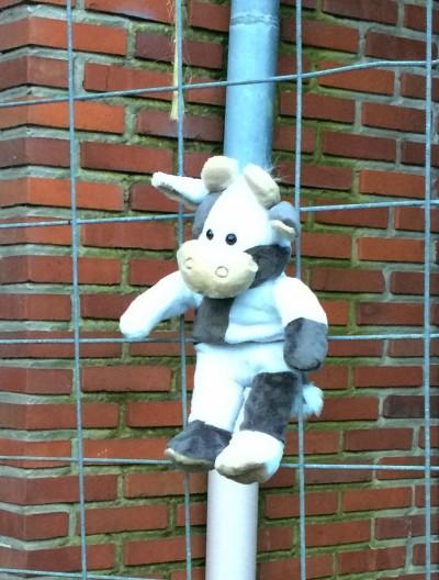 (Foto: M. Döring) Wilma hängt bei der LJ Hollen ab