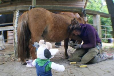 (Foto: Weber) Wilma und Huforthopädin Nadine bei den Miniaturpferden