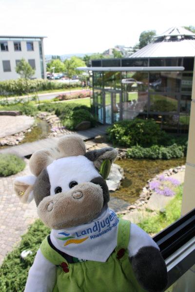 (Foto: Schröder) Wilma schaut sich die Geschäftsstelle der Landjugend Rheinland-Nassau in Koblenz an.