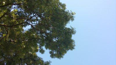 (Foto: Schmidt) Der Kontrast - Es gibt auch mal eine Minute, um das Wetter unter einem Baum zu genießen