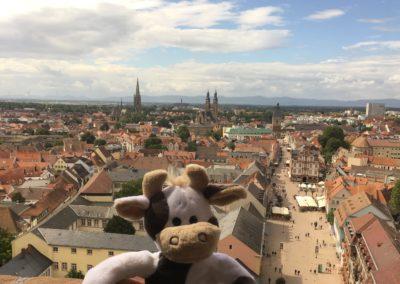 (Foto: Alfes) Wilma hoch über den Dächern von Speyer.