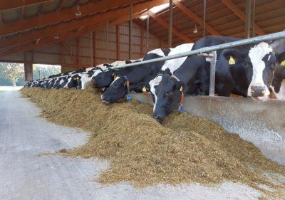 (Foto: Bohle) Auch die Kühe wollen täglich versorgt werden