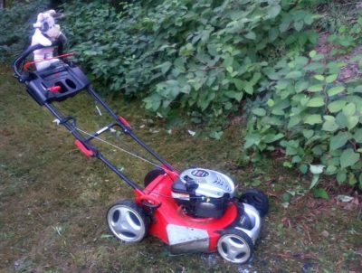 (Foto: LJ Halver) Wilma beim Rasen mähen