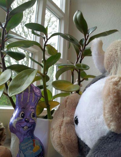 (Bild: WLL/Engberding) Wilma ist dem Osterhasen auf der Spur