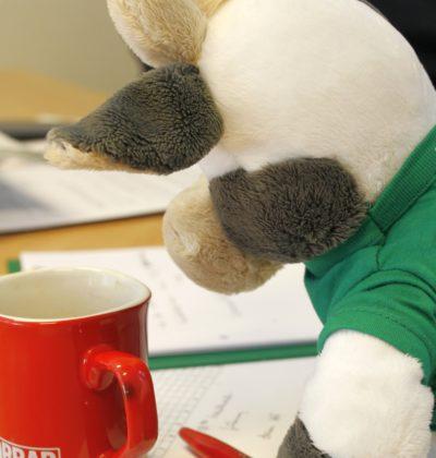 Wilma bei der Arbeit - Klausurvorbereitung mit der WLL-Geschäftsstelle (Foto: WLL/Welpelo)