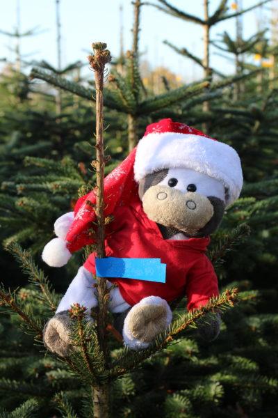 (Foto: WLL/Engberding) Wilma hat schon das Weihnachtsfieber gepackt