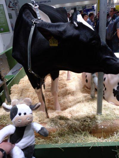 (BIld: Krüner) Wilma trifft Kuh und Schwein