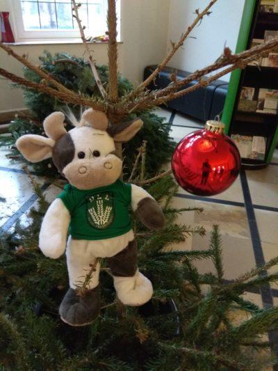 (Foto: WLL/Reinl) Der Weihnachtsbaum ist weg