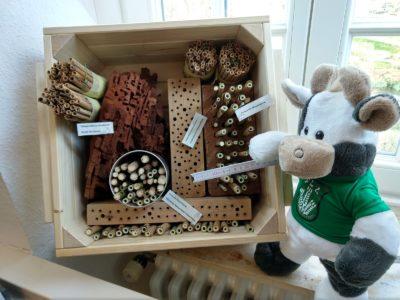 Nimmt noch Maß für ihr Projekt - WLL-Kuh Wilma (Foto: WLL/Welpelo)