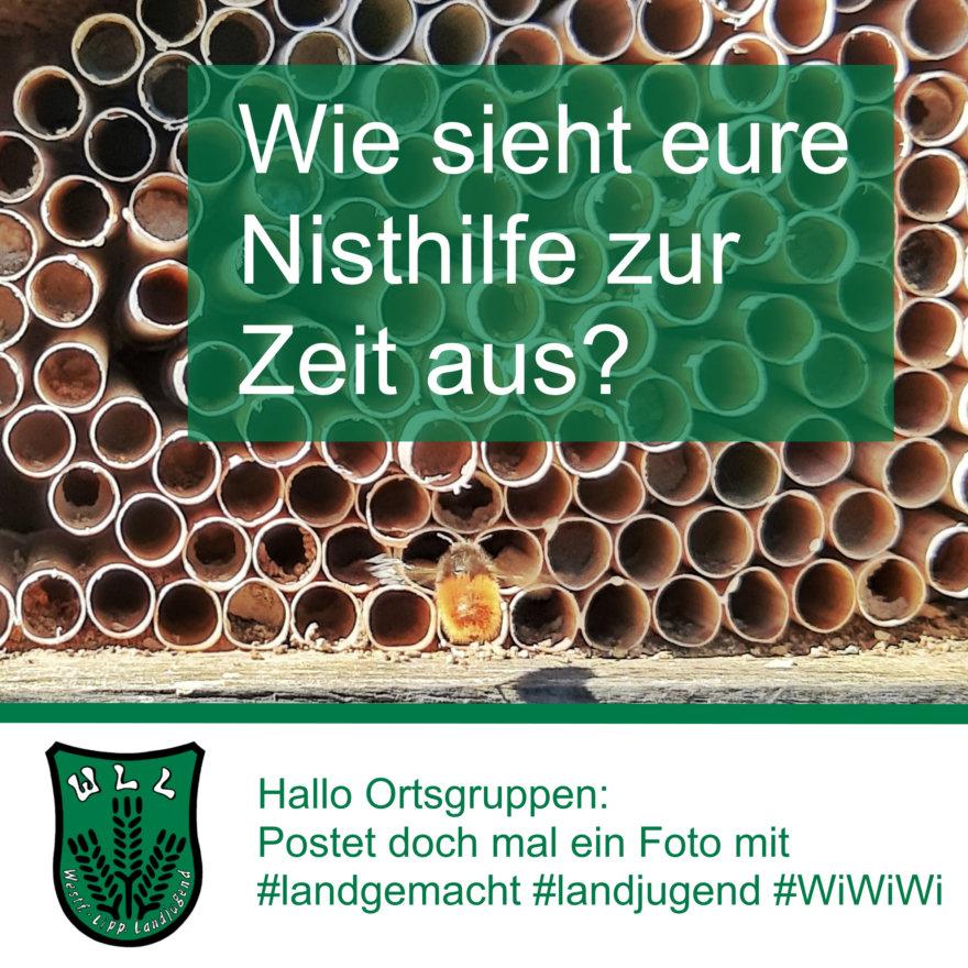 (Foto: WLL/Welpelo) Was ist bei eurem Insektenhotel los?