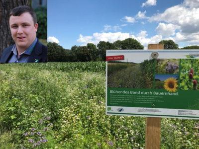Blumenwiese: Positionspapier Insektenschutz